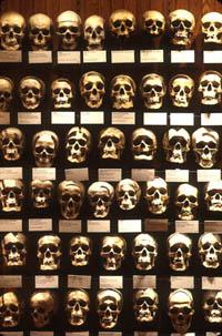 13.MutterMuseum-G.WidmanG.jpg