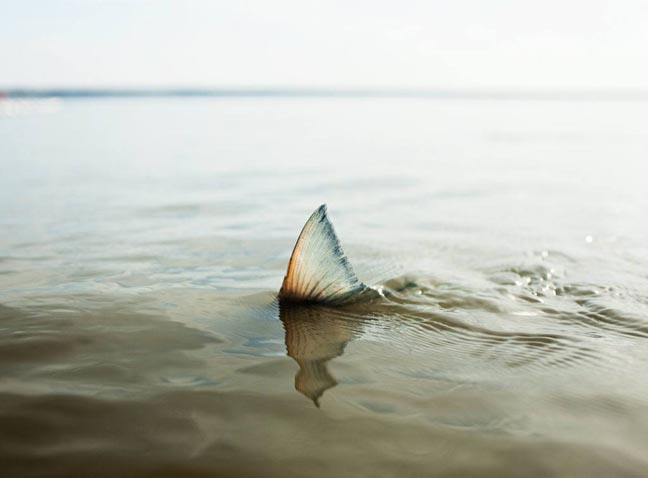 Corey_Arnold_Salmon_Shark.jpg