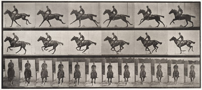 Muybridge_bouquet.jpg