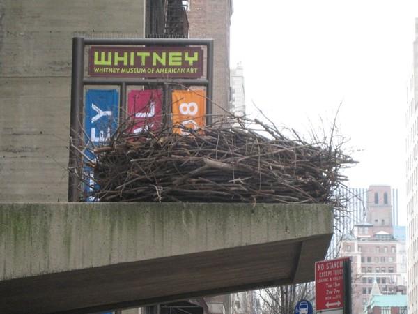 Nest_Haeg.jpg