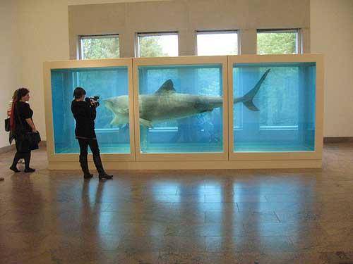 Shark_Hirst_met.jpg