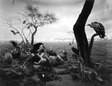 WOL_Hyena-Jackal-Vulture-1.jpg