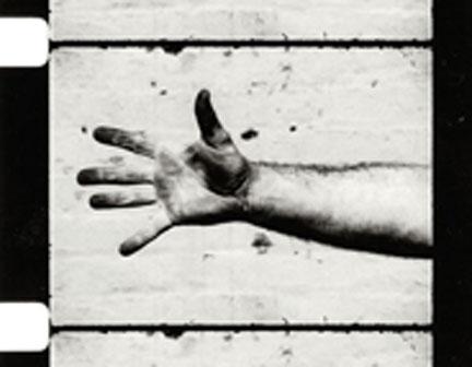WTP-Serra-hand_catching_lea.jpg