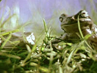 frog_jesus.jpg