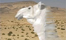 akram_zaatari.jpg