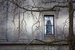 jones_trees.jpg
